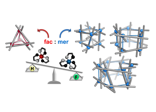 112. Perfluorinated ligands induce meridional metal stereochemistry to generate M8L12, M10L15 and M12L18 prisms