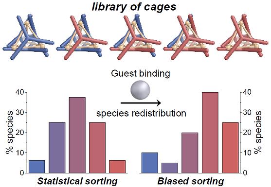 165. Guest Binding Drives Host Redistribution in Libraries of CoII4L4 Cages