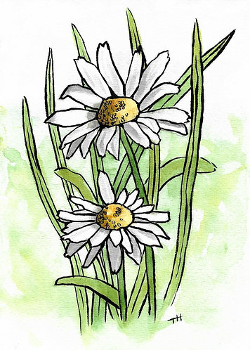 Daisies | Watercolor Painting