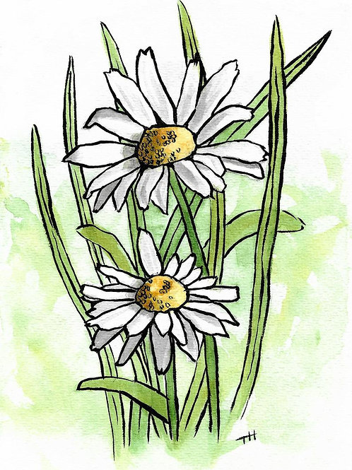 Daisies | Watercolor Painting