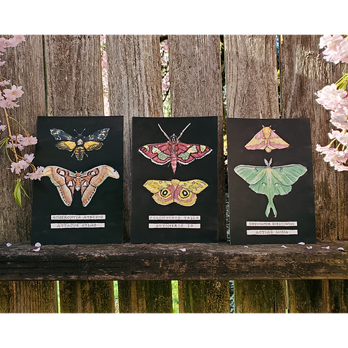 Moth Illustrations | Watercolor & Ink Triptych