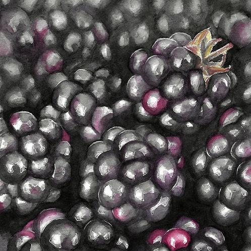 Blackberries | Watercolor Painting