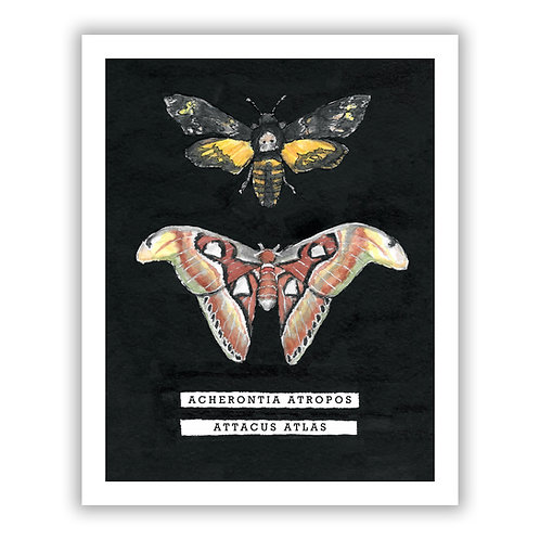 Death's Head Hawkmoth / Atlas Moth - Giclee Print