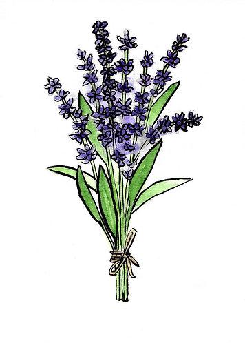 Lavender Bundle   Watercolor Painting