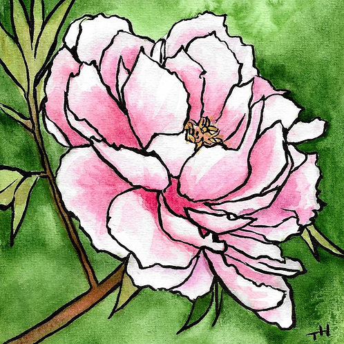 Peony Floral | Watercolor Painting