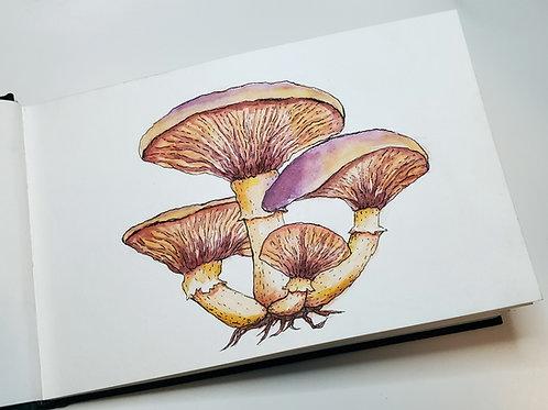 Mushrooms   Watercolor Painting