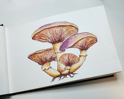 Mushrooms | Watercolor Painting
