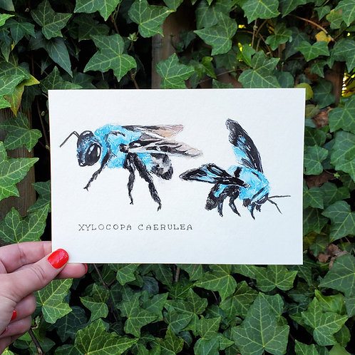 Blue Carpenter Bee | Watercolor & Ink Painting
