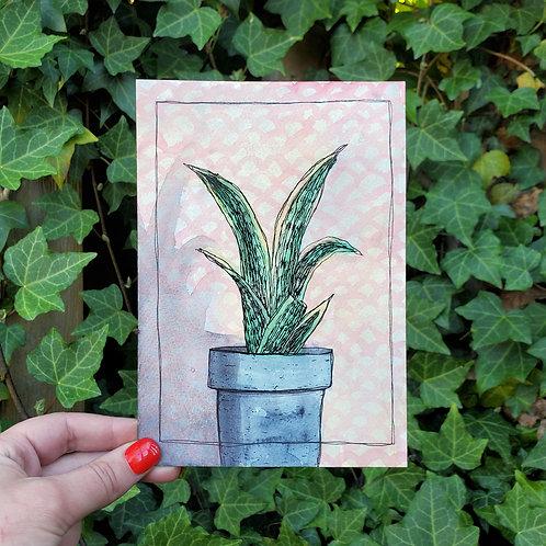 Snake Plant | Watercolor & Ink Sketch