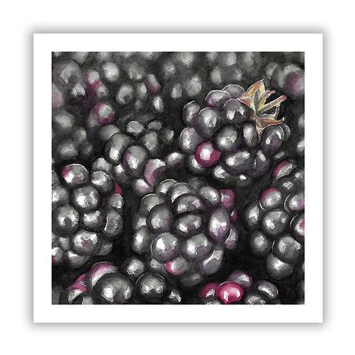Blackberries - Giclee Print