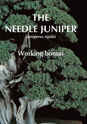 THE NEEDLE JUNIPER