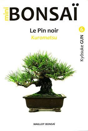 MINI BONSAI : LE PIN NOIR (Kuromatsu)