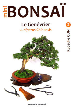 MINI BONSAI : LE GENÉVRIER