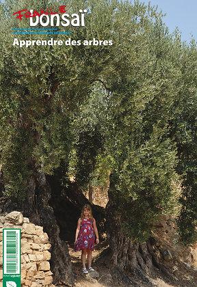 France Bonsaï : Apprendre des arbres