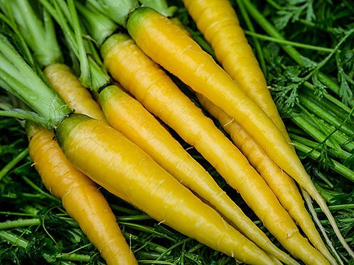 Baker Creek Heirloom Seeds - Carrot - Amarillo
