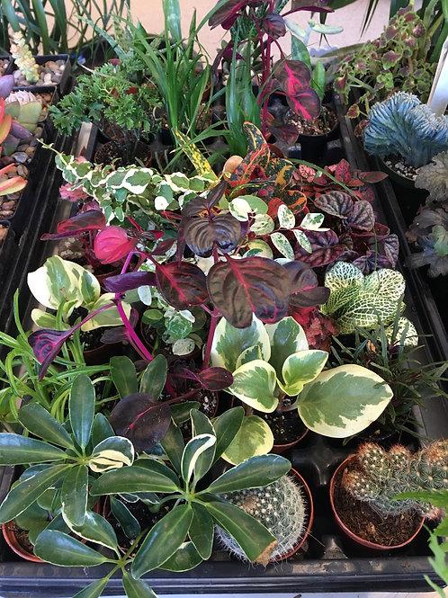 """Succulent & Cacti - 2"""""""