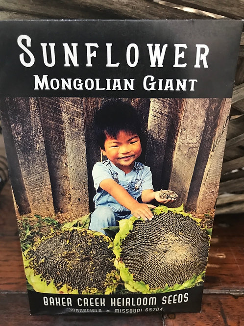 Sunflower Mongolian giant