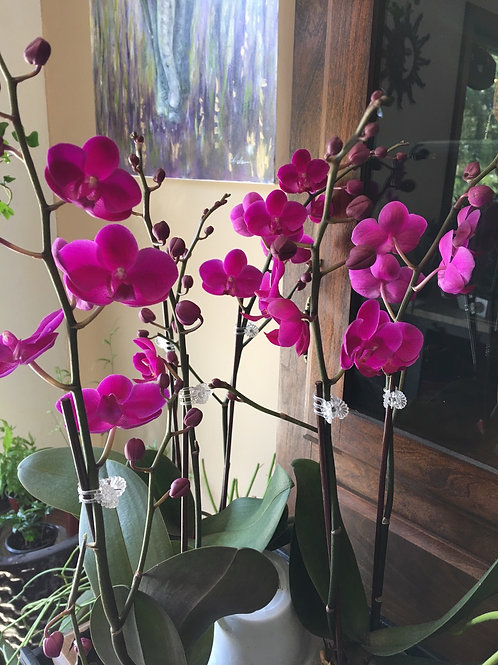 """Orchid 3"""""""