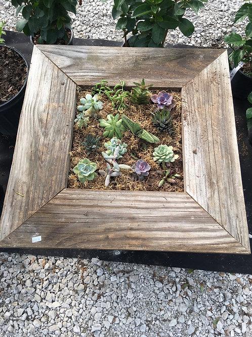Succulent Frame - Large Square