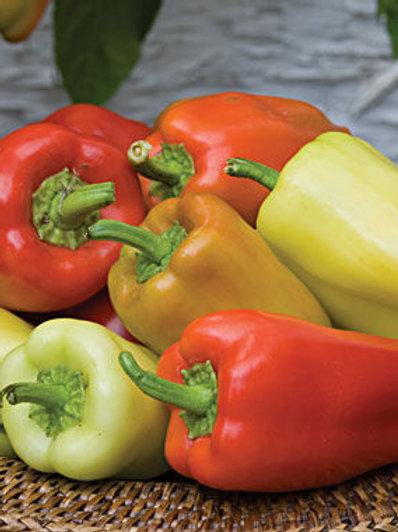 Pepper - Gyspy