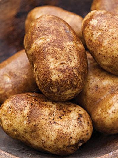 Potato - Norkotah Russet