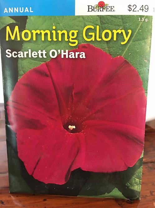 Morning Glory - Scarlett O'Hara