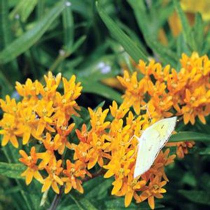 Butterfly Flower - Orange