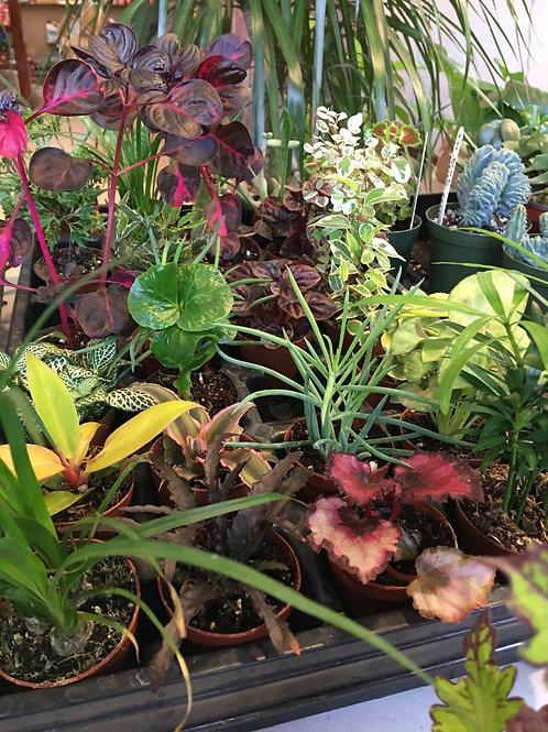 """Succulents & Cacti 3"""""""