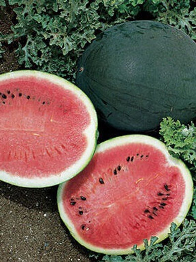 Baker Creek Heirloom Seeds - Watermelon - Sugar Baby Bush