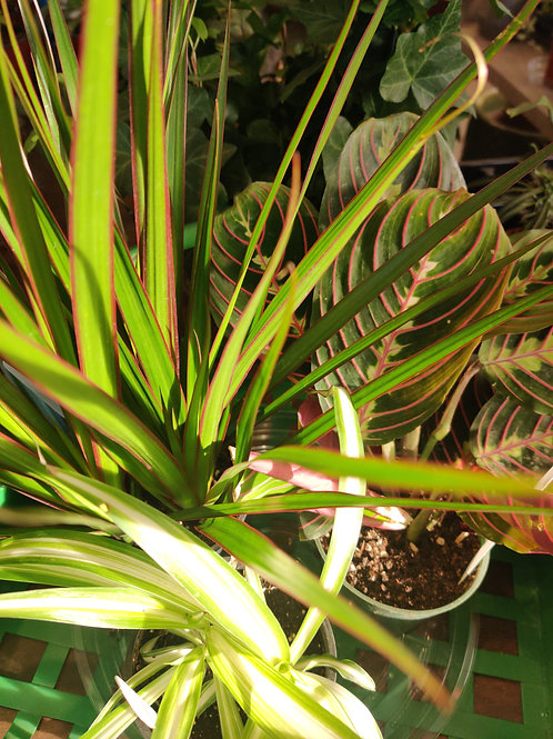 """Succulent & Cacti 4"""""""