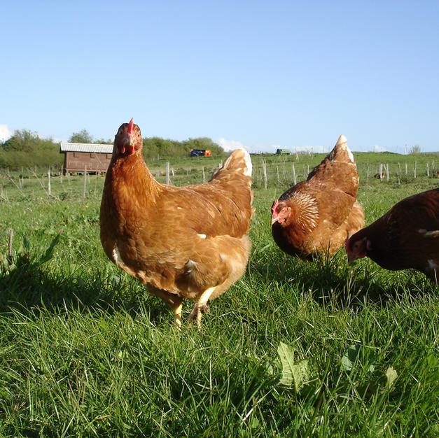 Nantclyd Farm Produce