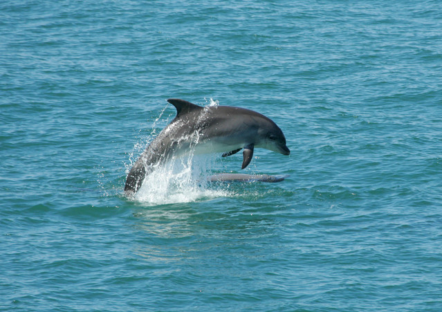 Dolphin capital of the UK