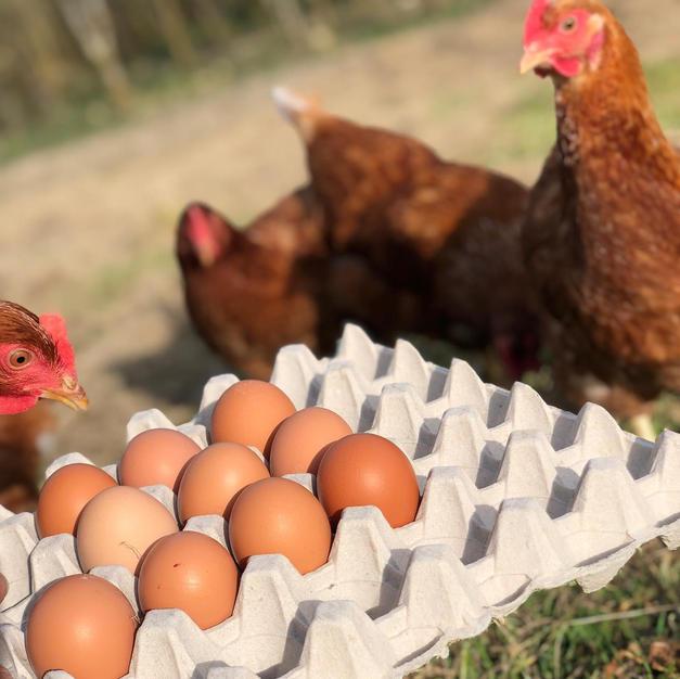 Treberfedd farm produce