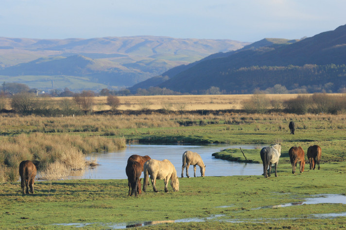 Ponies in the Cambrian Mountains