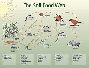 soil_health_diagram.jpg