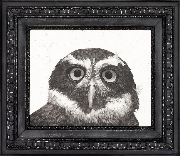 BarbaraMartin-Artwork_SpectacledOwl.jpg