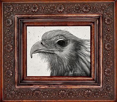 Barbara-Martin_SECRETARY-BIRD.jpg