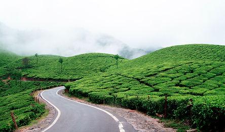 Tea_plantations_in_Munnar_1648.jpg
