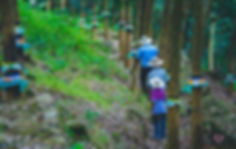 rubber-plantation-walk.jpg
