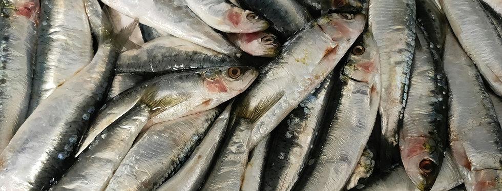 Sardines de la Turballe