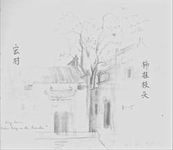Persimmons in Hong Cun