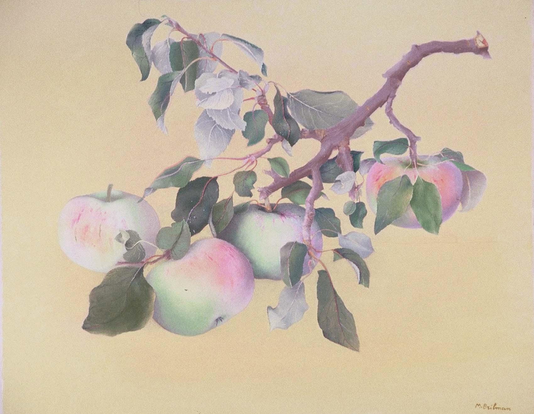 Les pommes Grand Alexandre