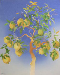 Lemon trees of Sharm el Sheik