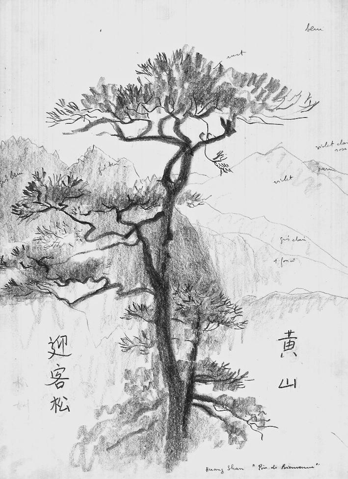 Welcome pine, Huangshan mountain