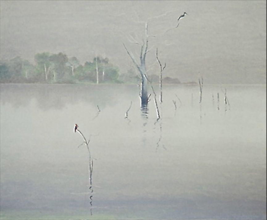 Kingfishers in the Amazon