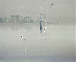 Martins-pêcheurs en Amazonie