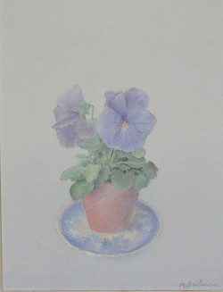 Viola tricolor flower
