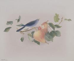 """The """"gourmand"""" blackbird"""