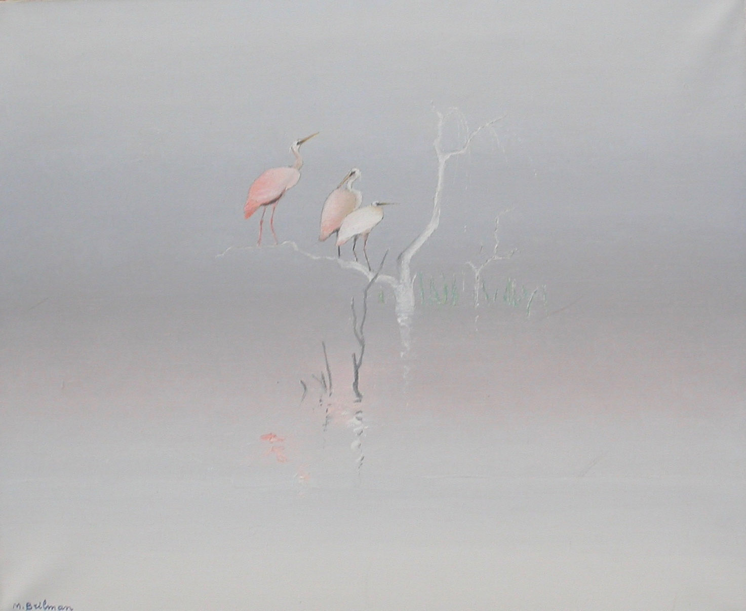 Egrets in the Amazon