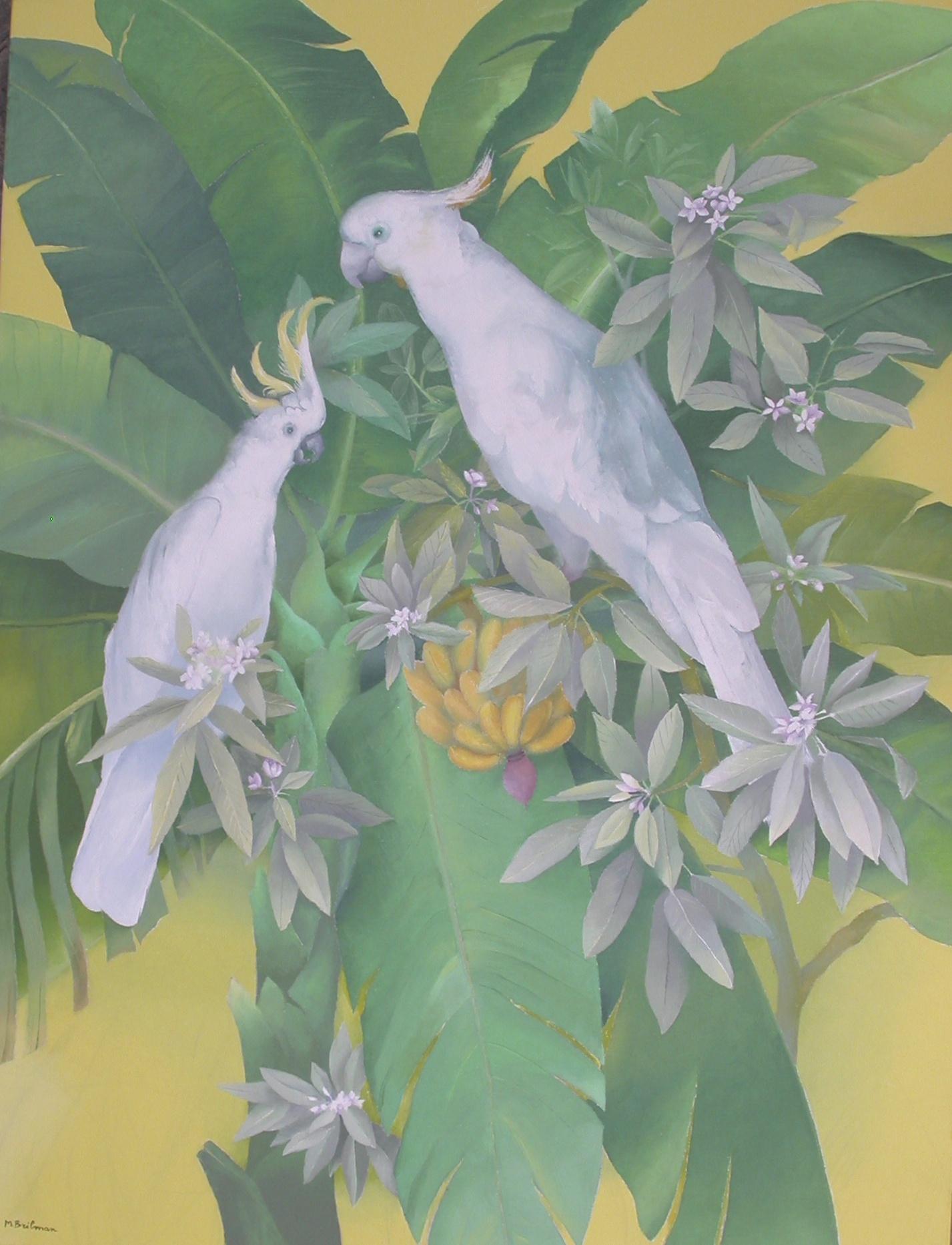 Les aras blancs